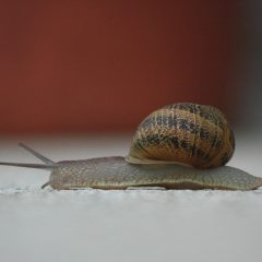 snail-thumb